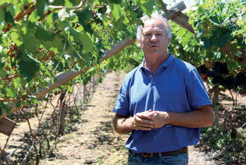 Sa Fruit Journal 2021 04 C Anthony Hill Evaluation Site Buffelskraal