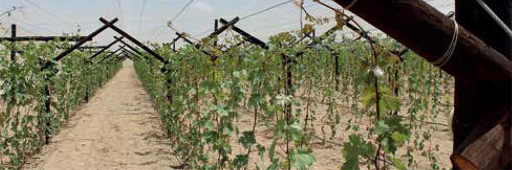 Sa Fruit Journal 2021 04 D Seedlings Lelienfontein Seedling Site