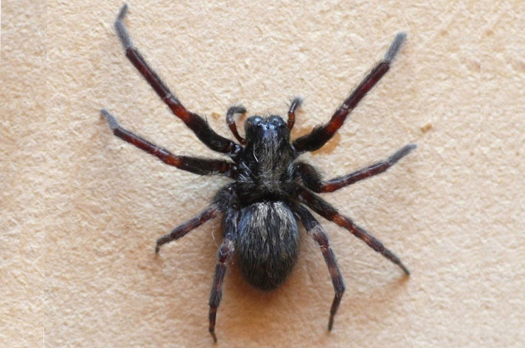 Sa Fruit Journal Aug Sept 2021 Grey House Spider Featured